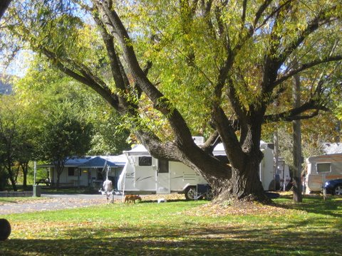 Tumbarumba Creek Caravan Park - Accommodation in Surfers Paradise