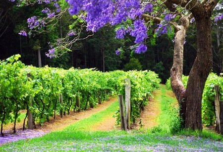 Bago Vineyards - Accommodation in Surfers Paradise