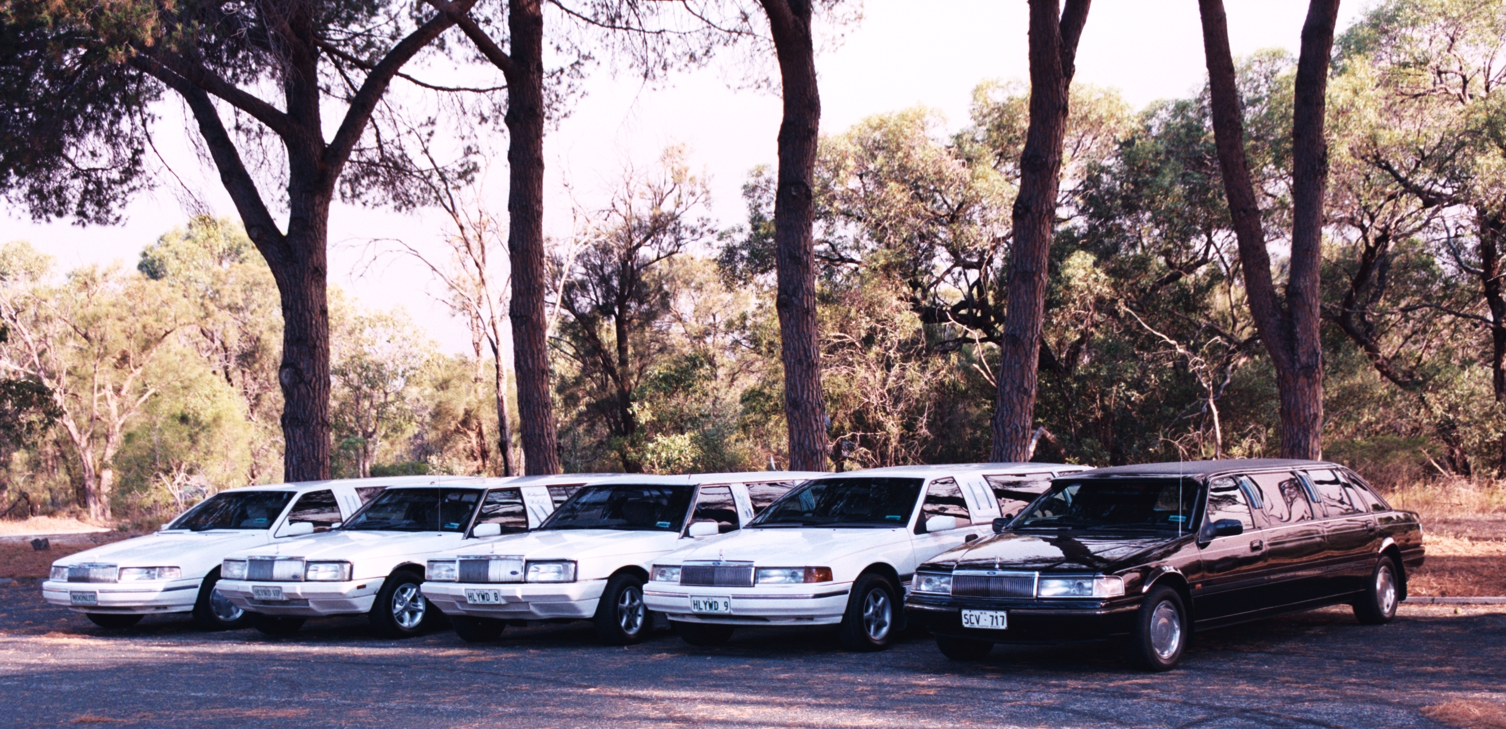 Hollywood VIP Limousines - Accommodation in Surfers Paradise