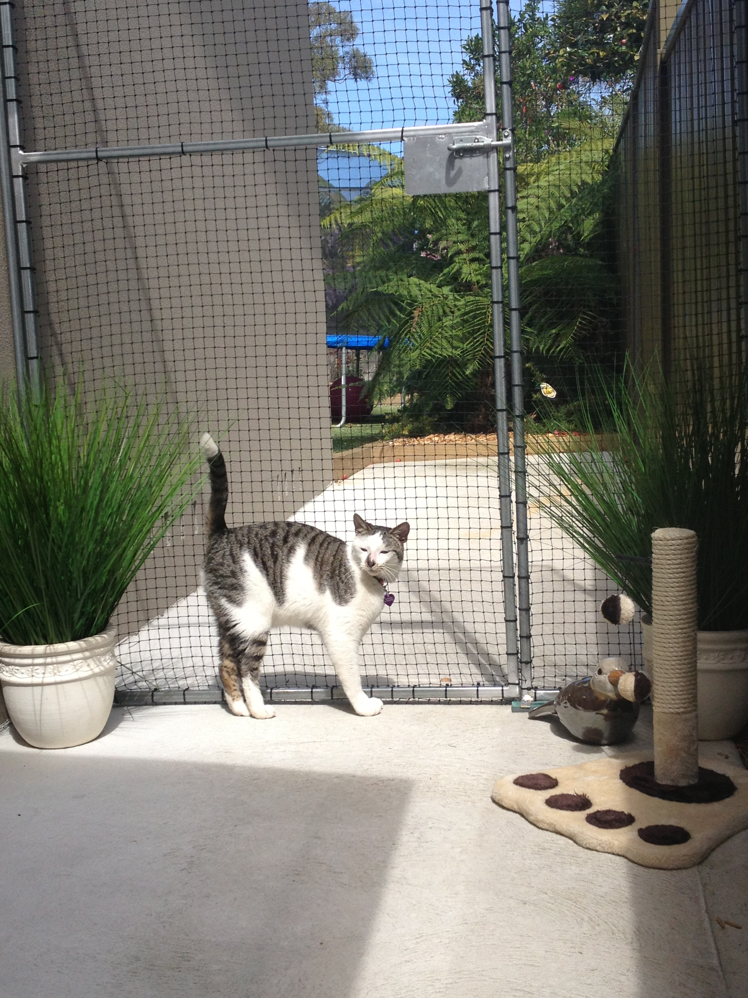 Caringbah Cat Hotel - Accommodation in Surfers Paradise
