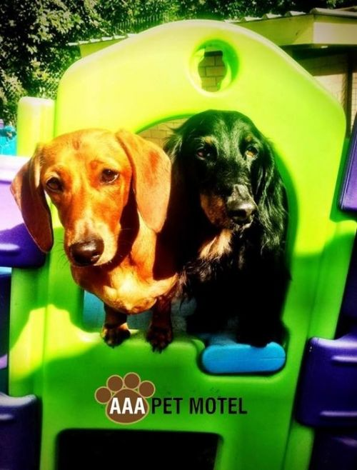 AAA Pet Motel - Accommodation in Surfers Paradise
