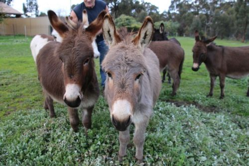 Donkey Tales Farm Cottages - Accommodation in Surfers Paradise