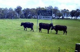 Cluan Homestead - Accommodation in Surfers Paradise