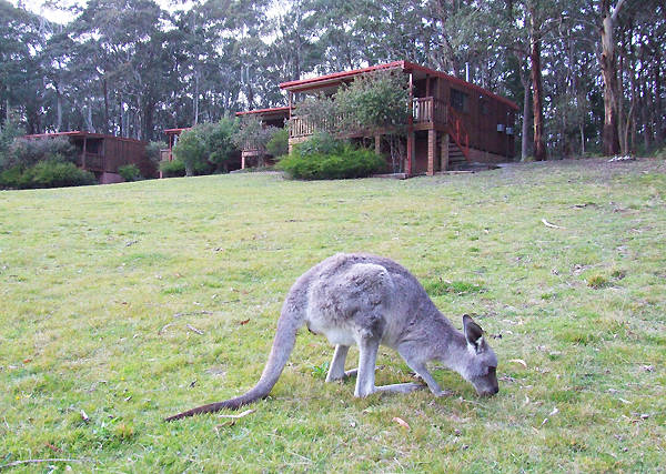 Jenolan Caves Cottages - Accommodation in Surfers Paradise