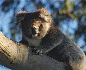 Bimbi Park Camping Under Koalas - Accommodation in Surfers Paradise