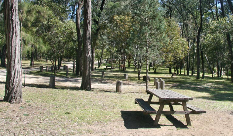 Lemon Tree Flat campground - Accommodation in Surfers Paradise