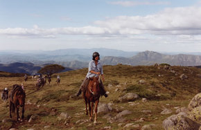 High Country Horses - Accommodation in Surfers Paradise