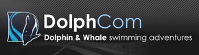 Dolphcom - Dolphin  Whale Swimming Adventures - Accommodation in Surfers Paradise