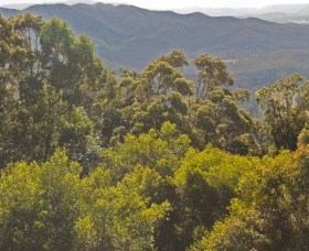 Conondale National Park - Accommodation in Surfers Paradise