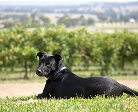Moothi Estate Vineyard and Cellar Door - Accommodation in Surfers Paradise
