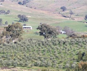 Wymah Organic Olives and Lambs - Accommodation in Surfers Paradise
