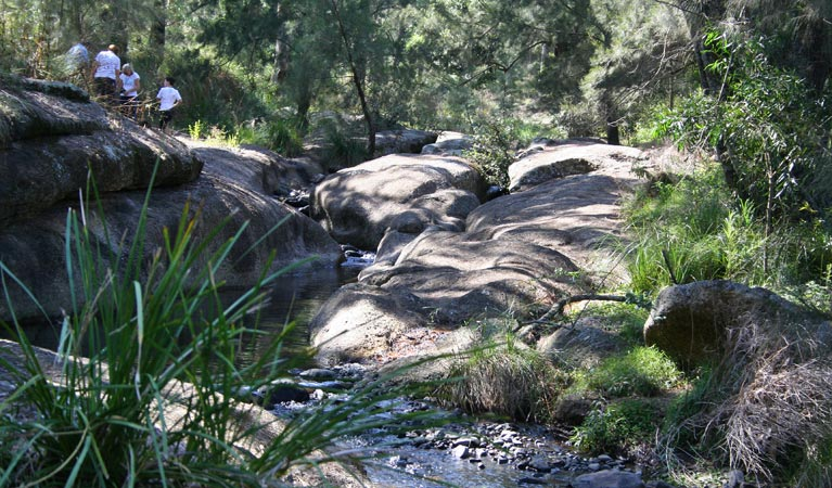 Towarri National Park - Accommodation in Surfers Paradise