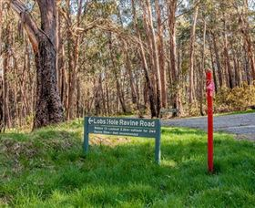 Lobs Hole Ravine 4WD Trail - Accommodation in Surfers Paradise