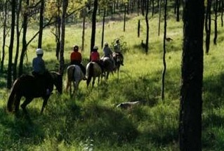 Hunter Valley Horse Riding and Adventures - Accommodation in Surfers Paradise