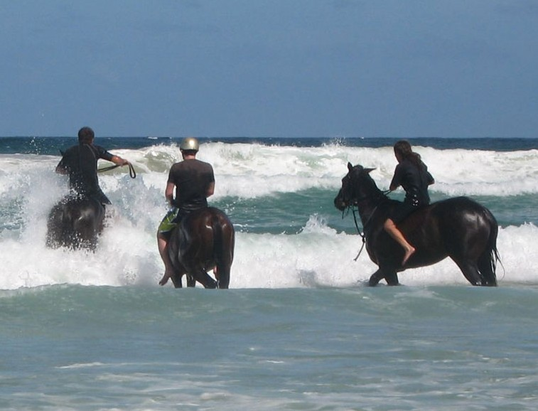 Pegasus Park Equestrian Centre - Accommodation in Surfers Paradise