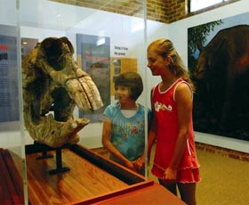 Australian Museum Diprotodon Exhibition - Accommodation in Surfers Paradise