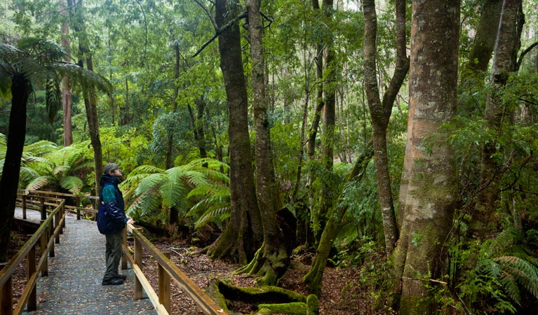 Monga National Park - Accommodation in Surfers Paradise