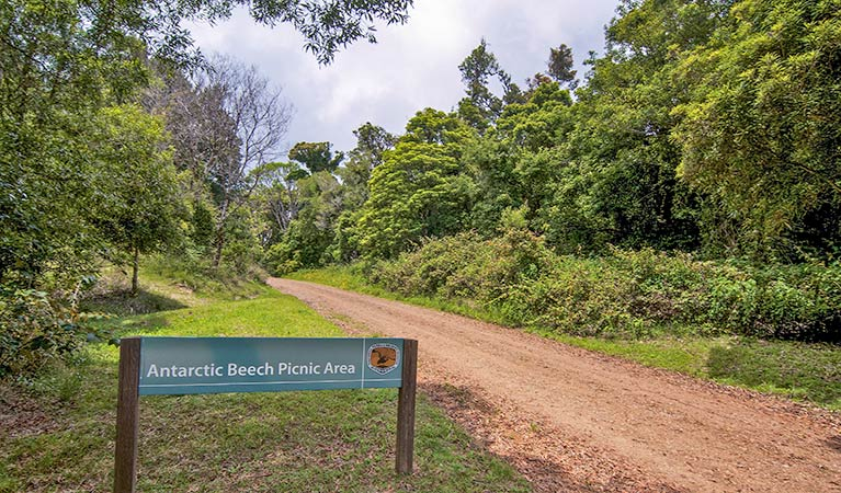 Antarctic Beech picnic area - Accommodation in Surfers Paradise