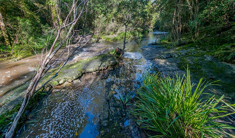 Dawson River walking track - Accommodation in Surfers Paradise