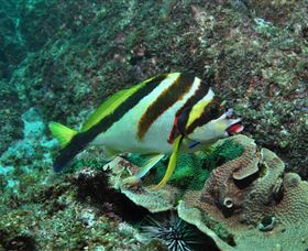 Palm Beach Reef Dive Site - Accommodation in Surfers Paradise