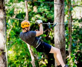 TreeTop Challenge Currumbin - Accommodation in Surfers Paradise
