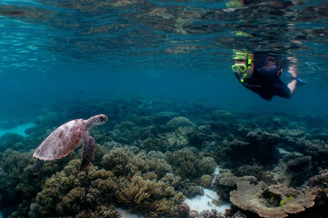 4 Day Ningaloo Reef Snorkel and Dive Getaway from Coral Bay