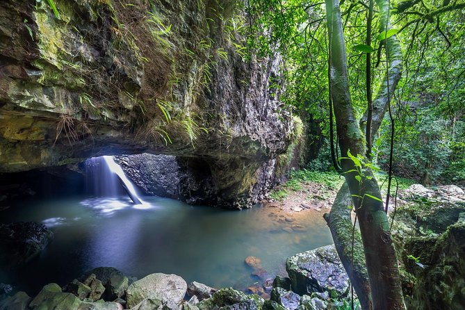 Springbrook and Tamborine Rainforest Tour Including Natural Bridge and Glow Worm Cave - Accommodation in Surfers Paradise