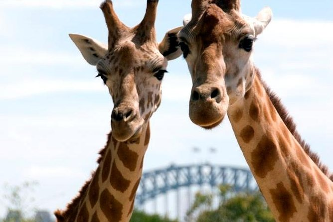 Sydney Harbour Ferry with Taronga Zoo Entry Ticket - Accommodation in Surfers Paradise