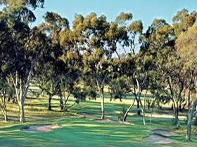 Tanunda Pines Golf Club - Accommodation in Surfers Paradise