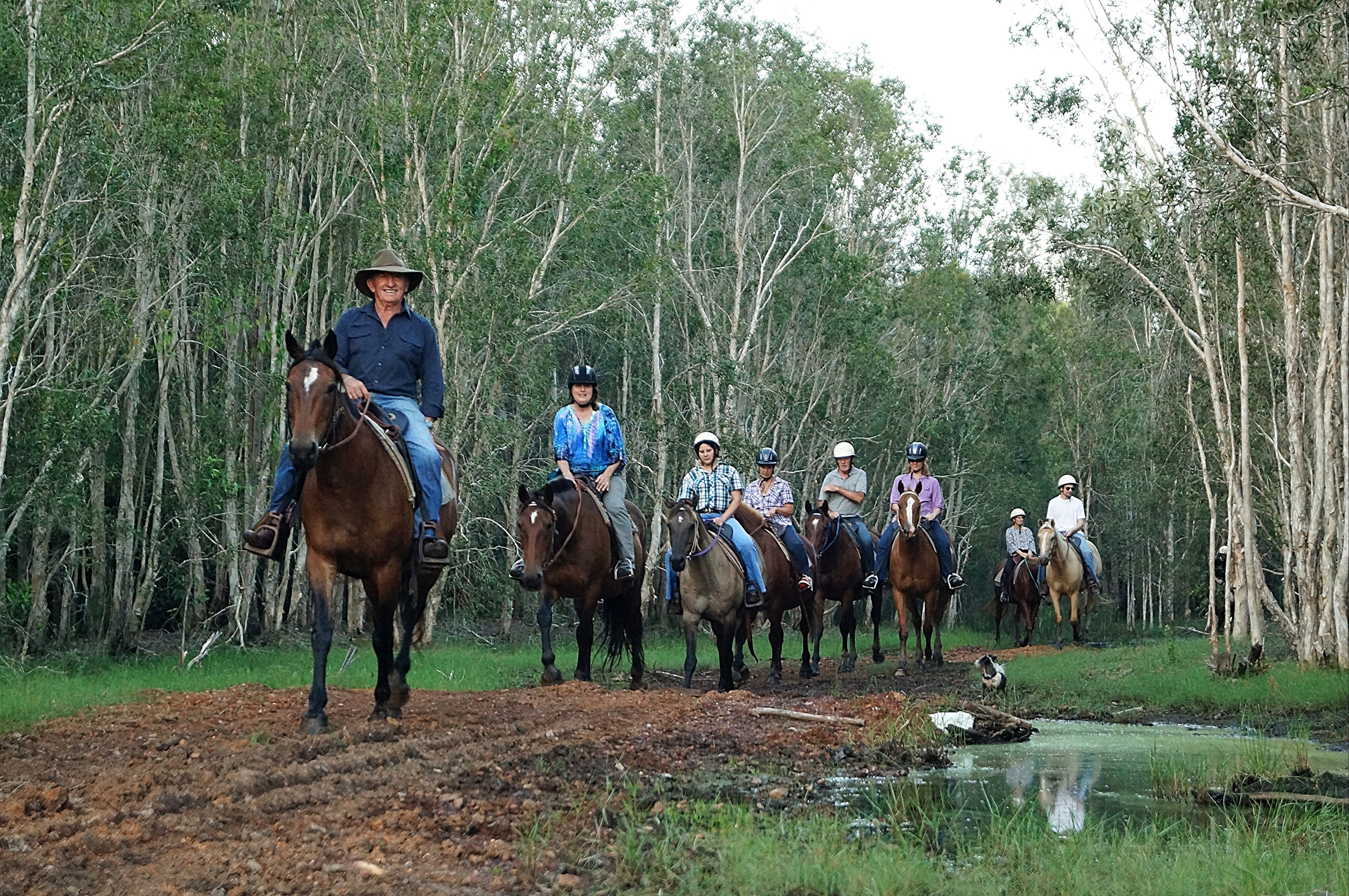 Night Horse Ride and Dinner - Accommodation in Surfers Paradise