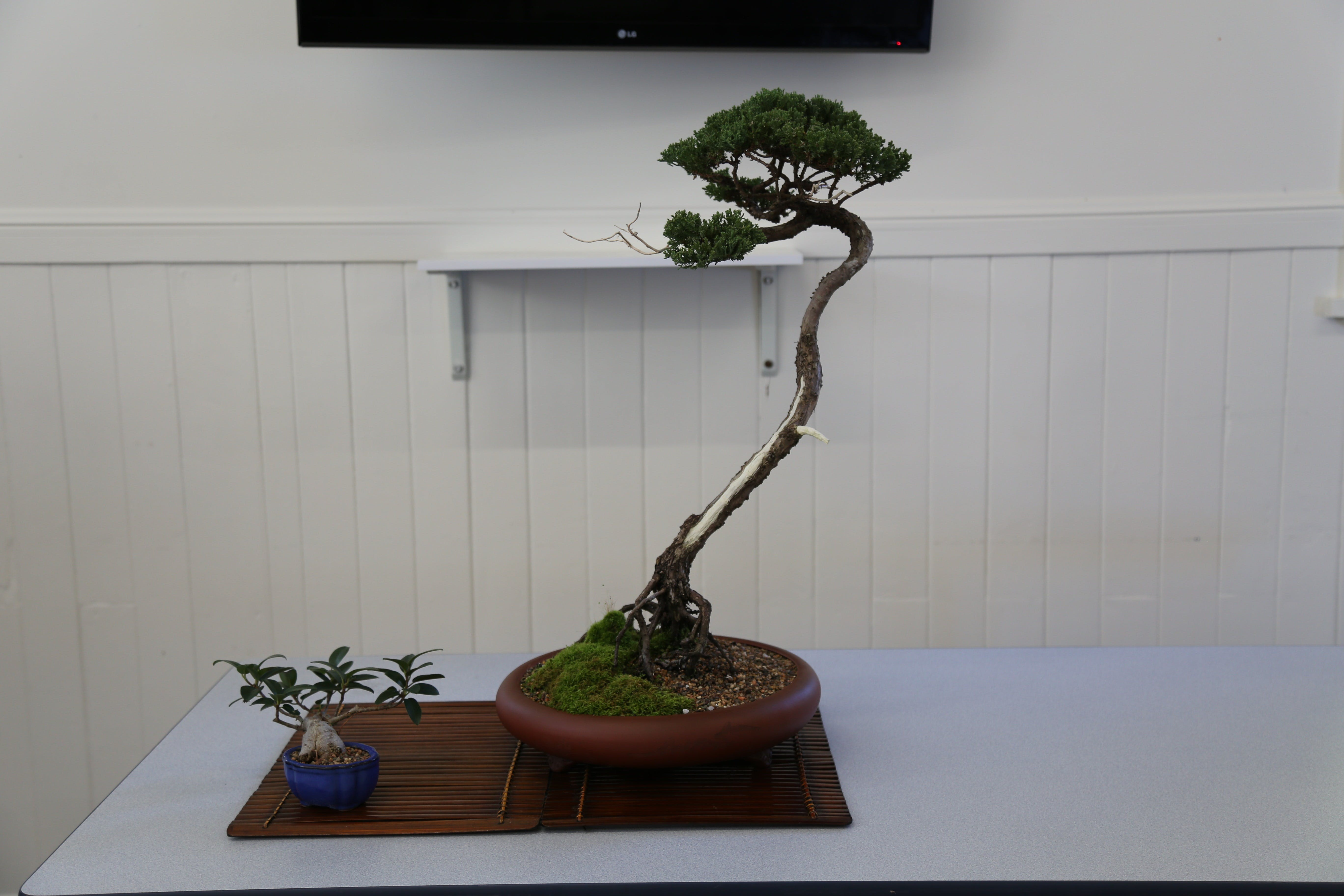 Wauchope Bonsai Workshop Group - Accommodation in Surfers Paradise