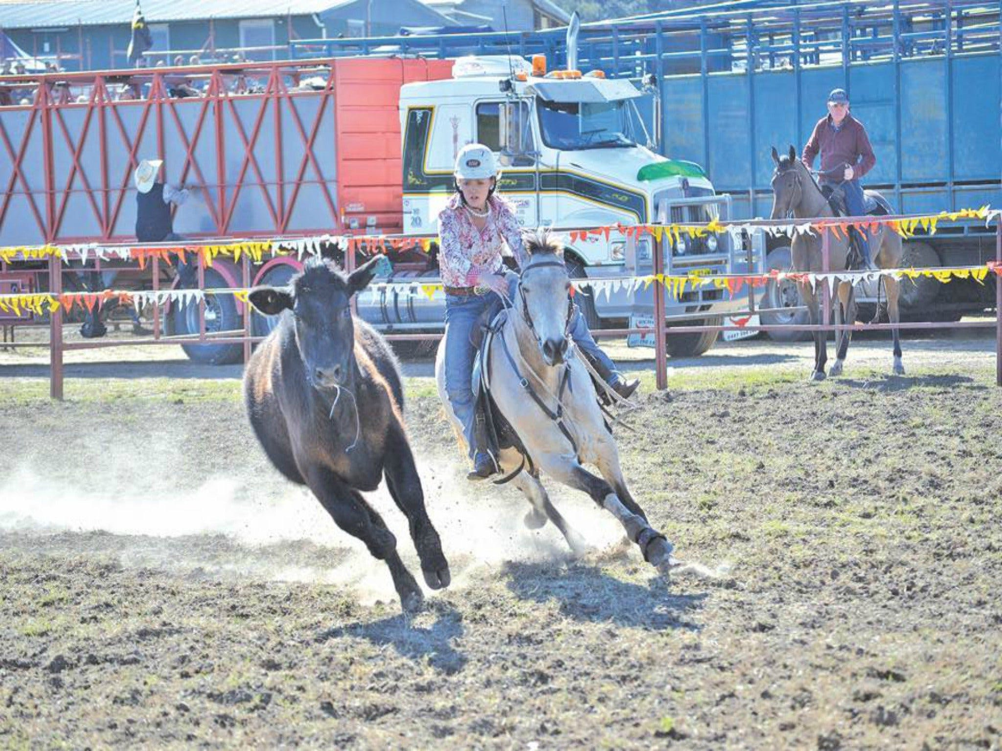 Gresford  Campdraft and Rodeo - Accommodation in Surfers Paradise