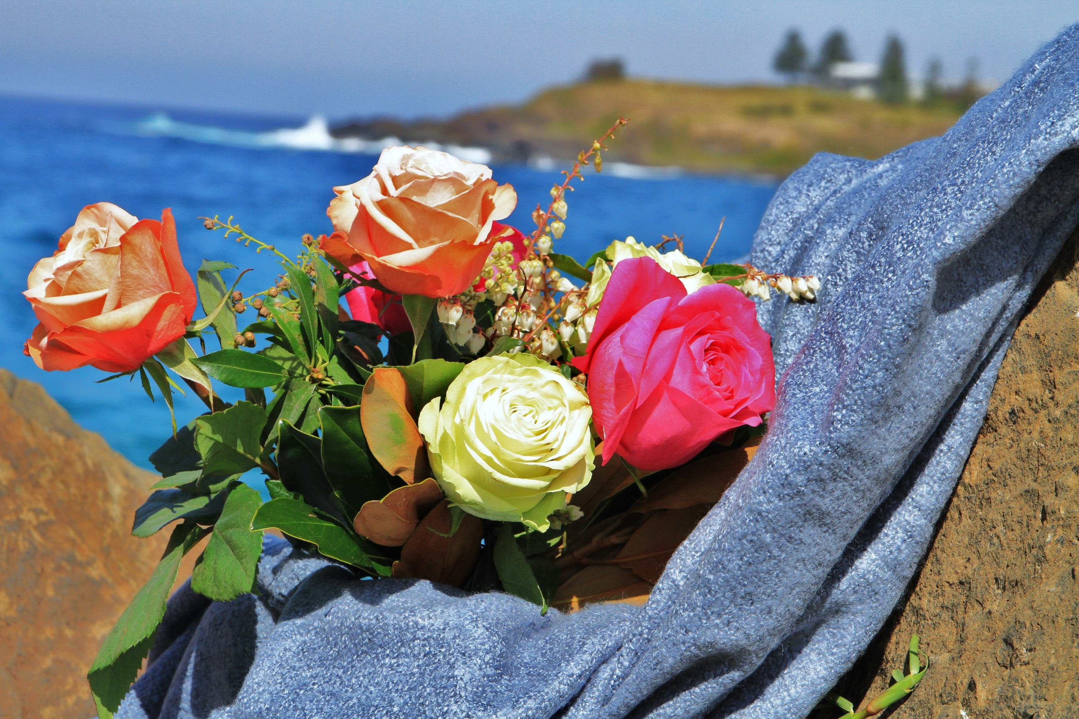 Roses by the Seaside National Rose Championships and Conference - Accommodation in Surfers Paradise