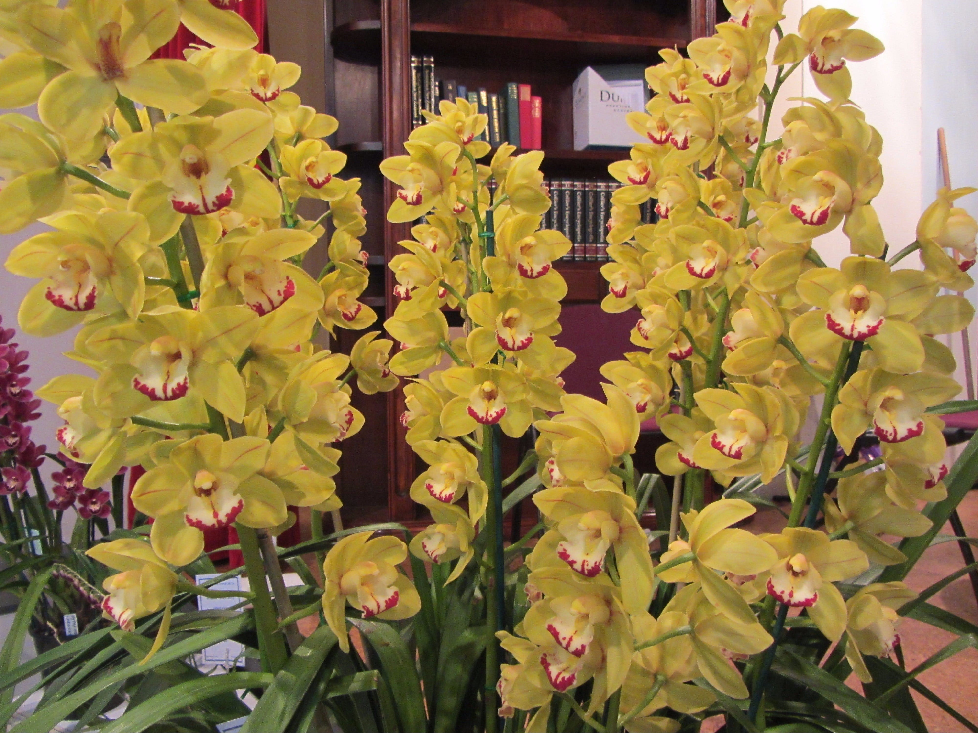 Sapphire Coast Orchid Club Winter Orchid Show - Accommodation in Surfers Paradise