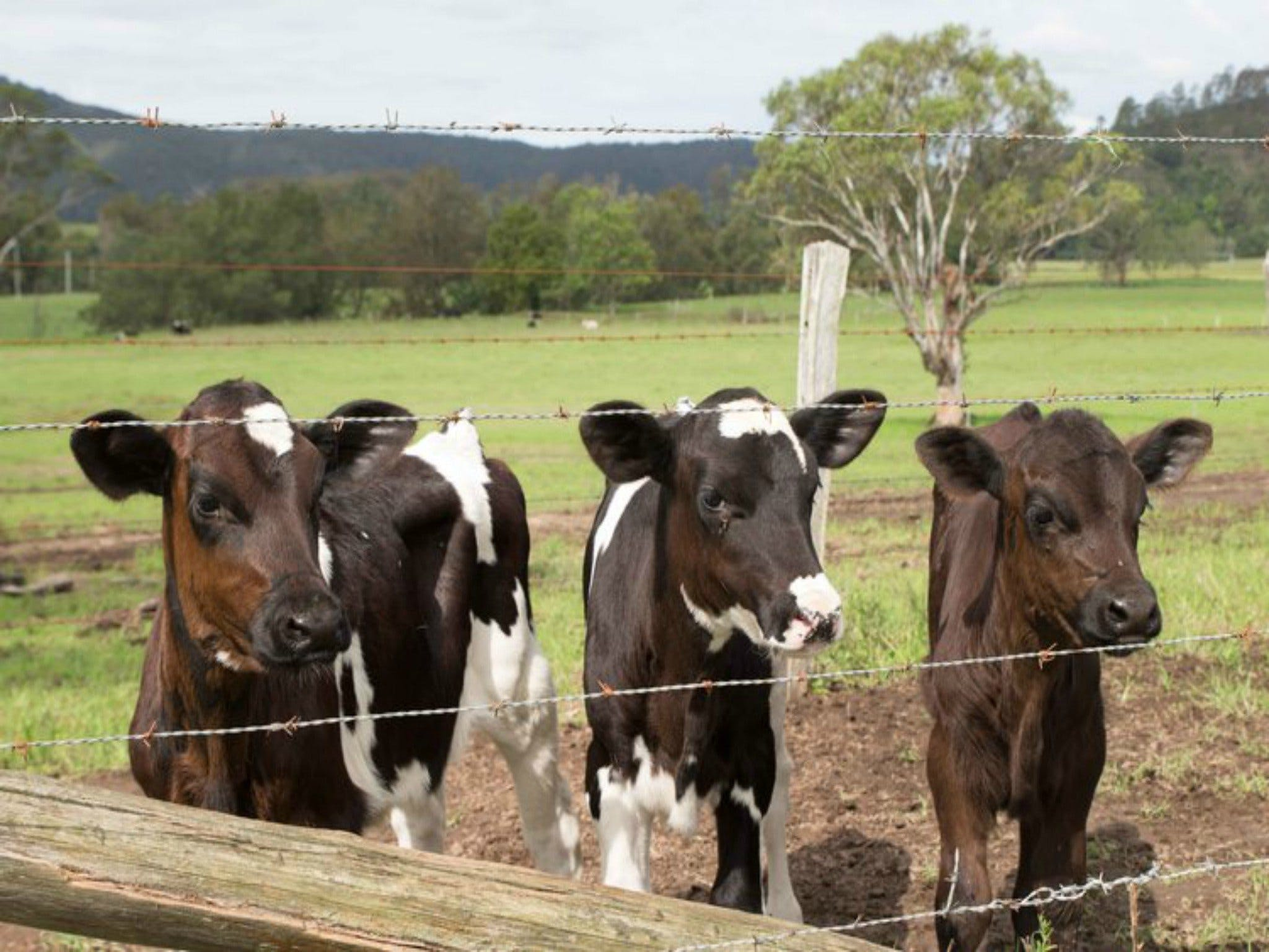 Bandon Grove Farm Tours - Accommodation in Surfers Paradise