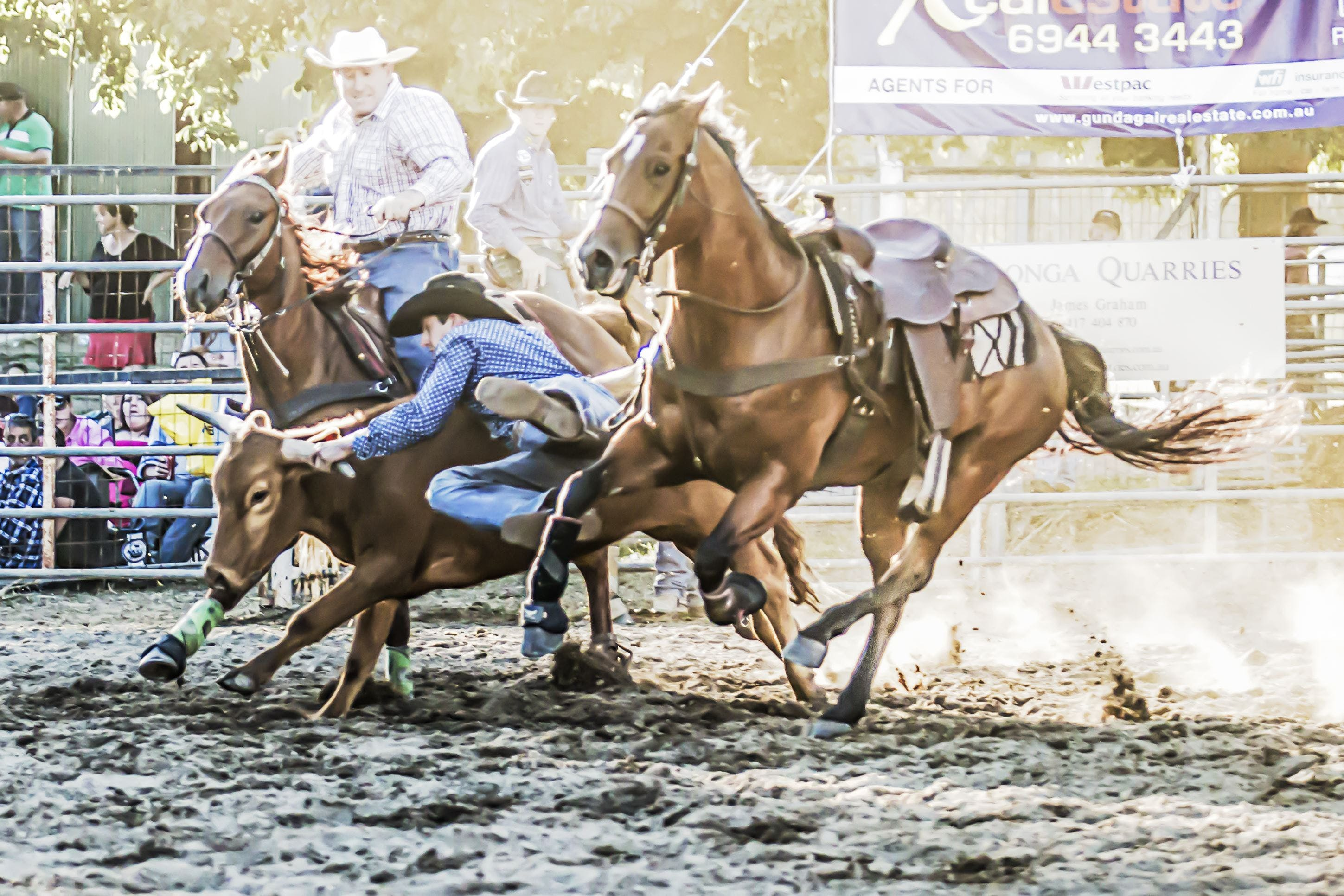 Gundagai Rodeo - Accommodation in Surfers Paradise