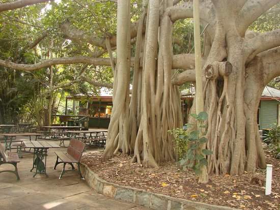 Gardens Tearooms - Accommodation in Surfers Paradise